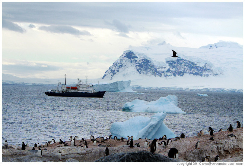 Gentoo Penguins, icebergs, snowy mountains, and the Polar Pioneer.