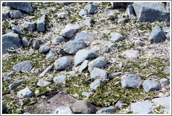 Ground covered with moss and penguin feathers.