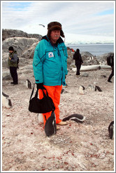 Baby Gentoo Penguins inspecting Tom.