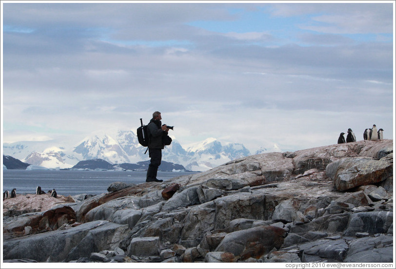 Ron photographing Gentoo penguins.