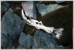 Penguin bones on a moss-covered ground.