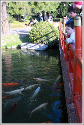 Children looking at koi. Jard?Japon? Palermo.
