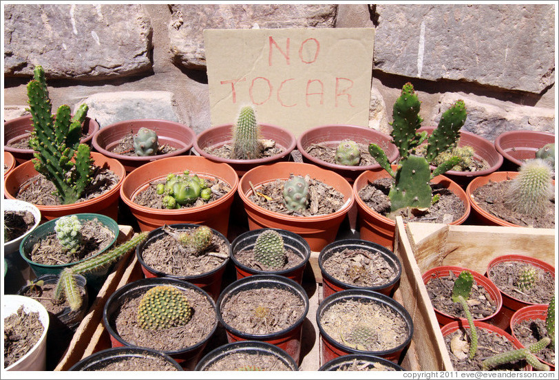 "Cacti for sale.  Sign says ""NO TOCAR"" (""DON'T TOUCH"")."