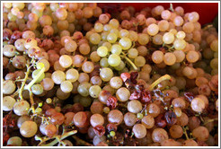 Grapes. Bodega Tierra Colorada.