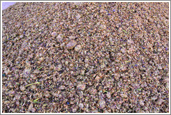 Grape pomace. Bodega Tierra Colorada.