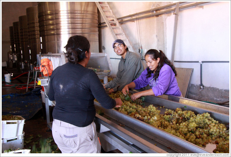 People working on the conveyor line. Bodega Tierra Colorada.