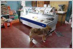 Dog searching for food inside a grocery store.