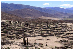 The Pre-Inca ruins of Tastil.