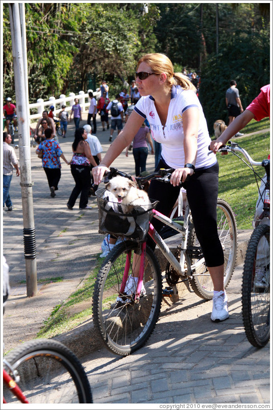 Woman riding a bike with a dog in its basket.  Parque do Ibirapuera.