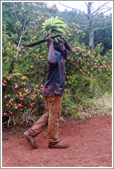 Boy carrying bananas and a machete on a farm near Bangangt