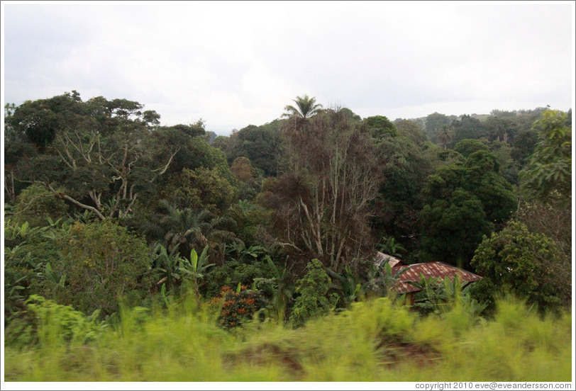 Houses in thick foliage on Route N5.