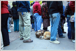 Homeless dog, sleeping amid standing people.  Plaza de Armas.