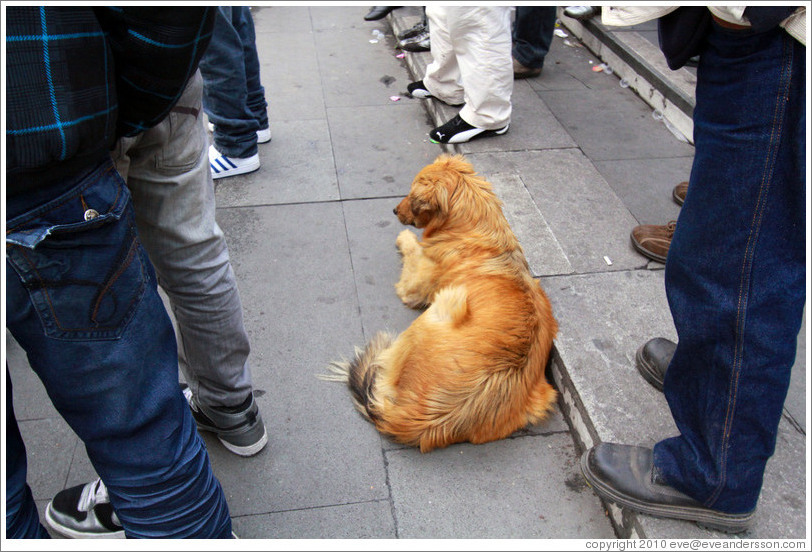 Homeless dog, lying down amid standing people.  Plaza de Armas.