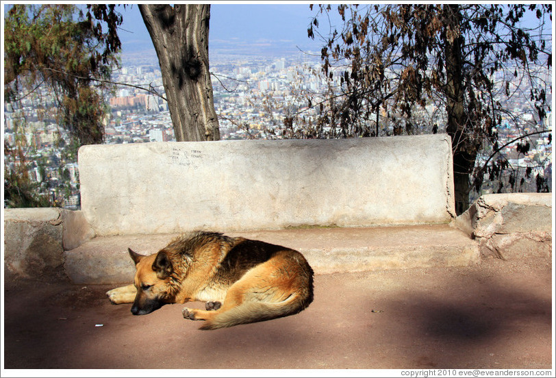 Homeless dog, resting on the top of Cerro San Crist?.