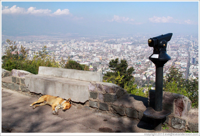 Homeless dog, sleeping at a viewpoint at  the top of Cerro San Crist?.