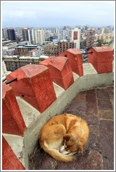 Homeless dog, sleeping in the observation tower on the top of Cerro Santa Luc�a.