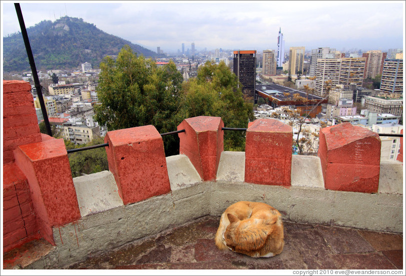 Homeless dog, sleeping in the observation tower on the top of Cerro Santa Luc?
