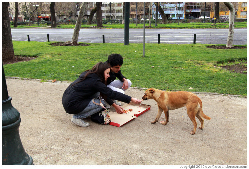 People feeding pizza to a homeless dog.  Parque Forestal.