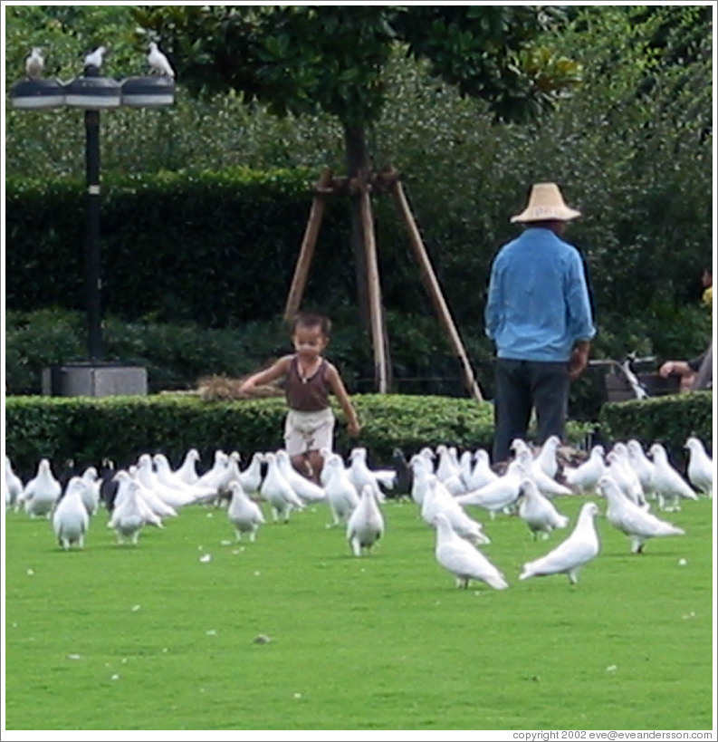Boy chasing doves in People's Park.