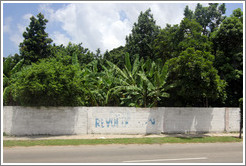 "Faded letters painted on the wall spelling ""Revolución""."