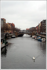 Christianshavns canal, with swan.