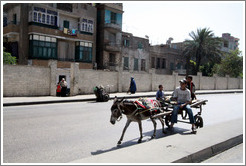 Donkey and cart in the streets of Cairo.
