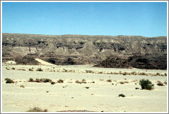 Sinai Desert (grey and beige, with shrubs).