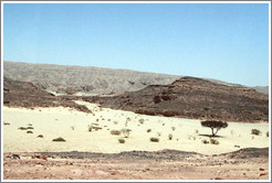 Sinai Desert (beige, pink, and grey, with a tree).