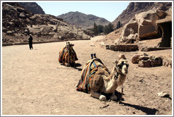Camels near St. Catherine's Monastery.
