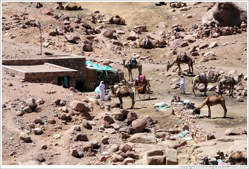 Bedouins with camels near St. Catherine's Monastery.