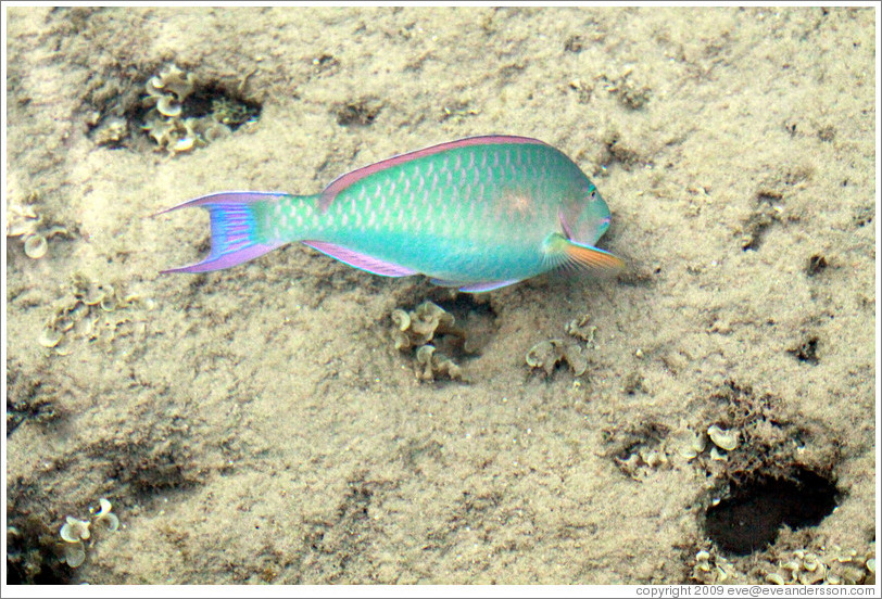 Green, blue, pink, purple, yellow, and silver fish in the corals just offshore.