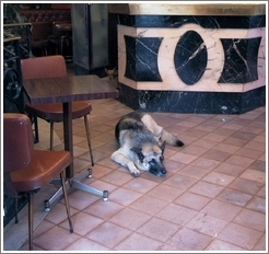 Cafe with two dogs inside, Montparnasse.