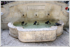 Fountain with four pigeons.  The fourth waits for his turn under a spout.  Boulevard Aristide Briand.  Old town.