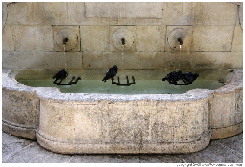 Fountain with four pigeons.  Boulevard Aristide Briand.  Old town.