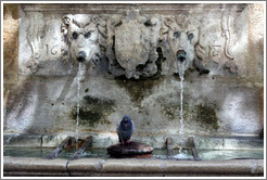 Fontaine Esp?que.  Lion spouts and a pigeon.  Old town.