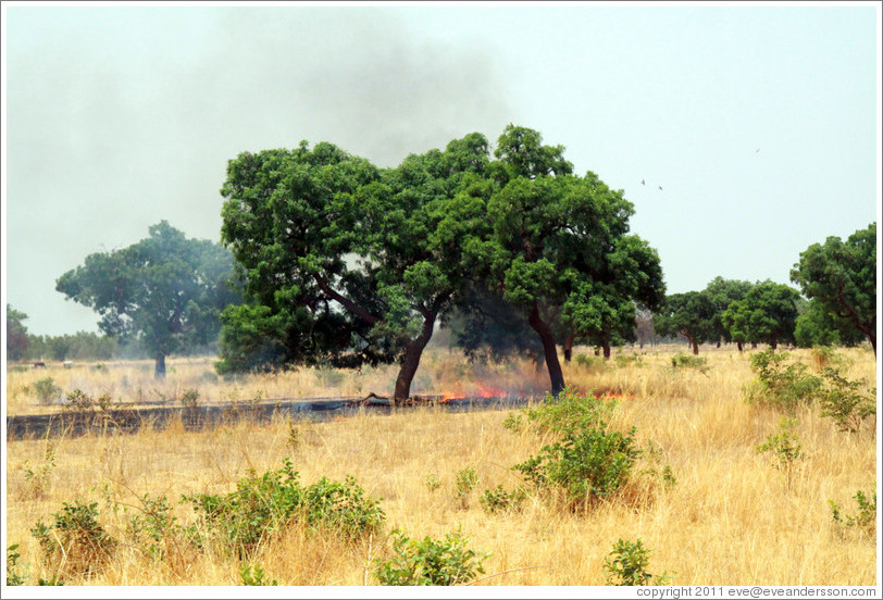 Clearing grass for farmland via burning.