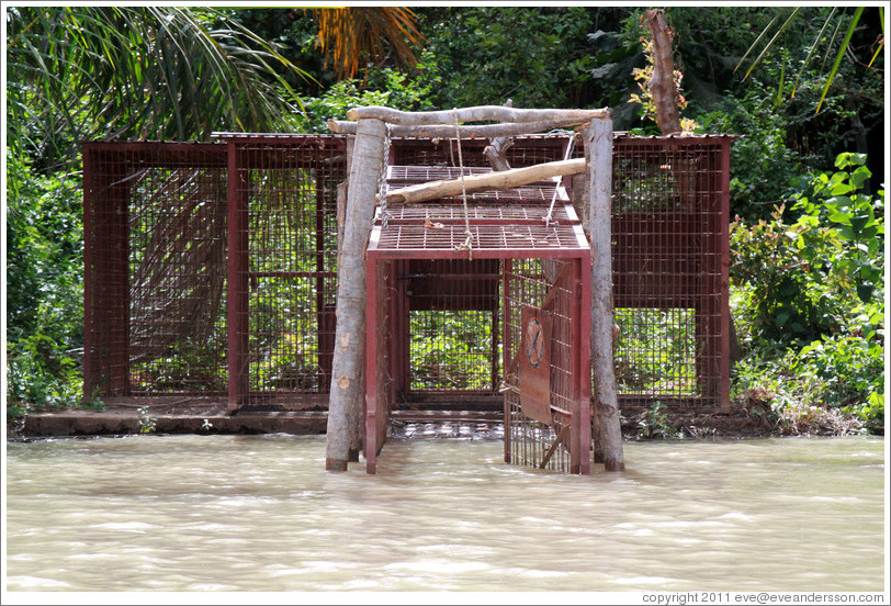 Cage through which chimpanzees are introduced to the Baboon Islands in the Chimpanzee Rehabilitation Project.