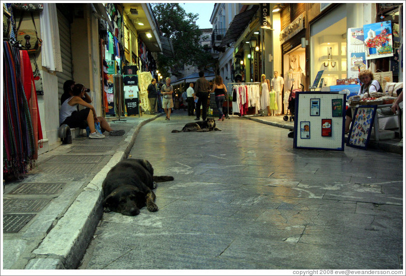 Dogs resting in the street in Plaka (Πλάκα), an old neighborhood in Athens.