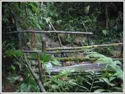Bridge in the Biotopo del Quetzal.