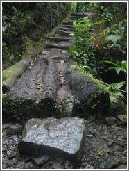 Path and stone, Biotopo del Quetzal.
