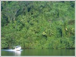 Boat and lush vegetation.
