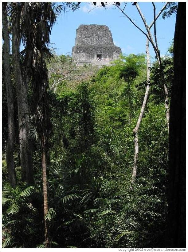 Tikal.  Templo IV.  Most of Templo IV is still covered by dirt and plants.  Only the top has been uncovered.