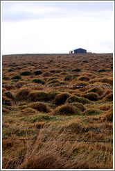 ??fur (hummocks, or mounds of earth) covered by wild grasses.