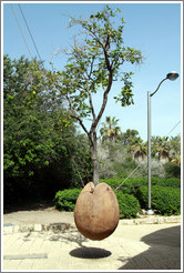 Tree growing from a concrete seed, Artists' Quarter, Old Jaffa.