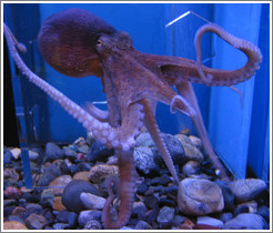 Kuji Aquarium.  This friendly octopus could squeeze through any shape in his playpin(?), and he would go to visit anyone who was watching him.
