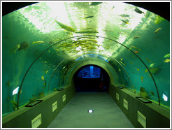Kuji Aquarium.  Tunnel.