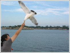 Girl feeding seagull.