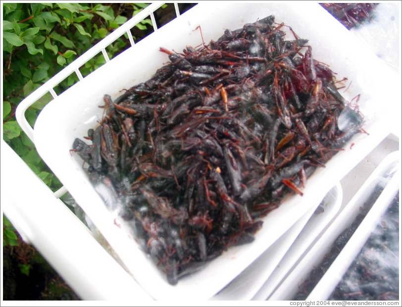 Grasshoppers for sale at Kegon Falls.