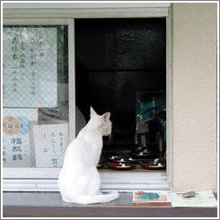 Begging cat.  Asakusa neighborhood.
