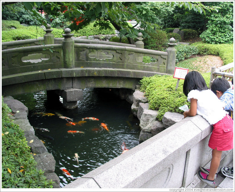 Senso ji temple kids at koi pond photo id 11197 tokyo for Giant koi pond